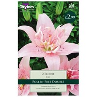 Taylors Bulbs Lily Elodie (2 Pack) (TS589)