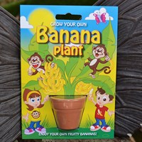 Fun Seeds - Grow Your Own: Banana Plant