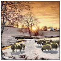 Noel Tatt 8  Pack Charity Christmas Cards - Sheep Sunset - 16cm (41523)