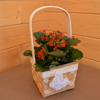 Butterfly Square Basket - Kalanchoe