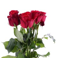 Rose Long Stem (x 5 Stems) - Red