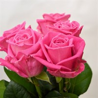 Rose Short Stem (x 6 stems) - Pink