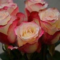 Rose Short Stem (x 6 stems) - Sweetness