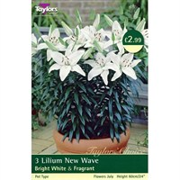 Taylors Bulbs Lily New Wave (Pack of 3) (TS582)