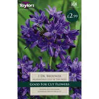 Taylors Bulbs Agapanthus Dr. Brouwer (Single Pack) (TS800)