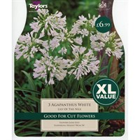 Taylors Bulbs Agapanthus White (3 Pack) (XL561)