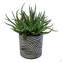 Aloe Humilis In Circular Mid Grey Leaf Gisela Graham Pot