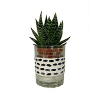 Aloe Humilis Set Into A Glass Mosaic Pot With Fish Decoration