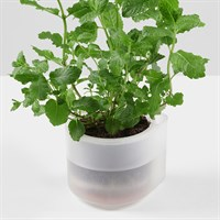 Boskke Till Planter Single 10.5cm - Clear (BTP10C)