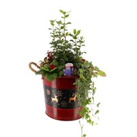 Christmas Festive Bucket - Extra Large - Christmas Outdoor Planter