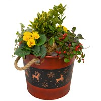 Christmas Festive Red Pot Mixed Planter - Extra Large