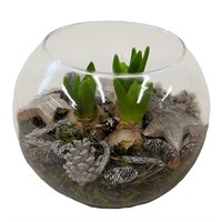 Christmas Planted Glass Fish Bowl Arrangement Houseplant Gift