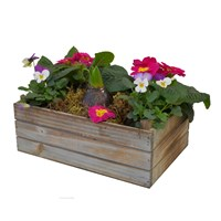 Wooden Crate Planter Arrangement - Medium