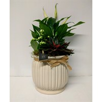 Combo Beige Ceramic Planter