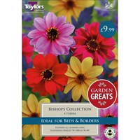 Taylors Bulbs Dahlia Bishops Collection (4 Pack) (SV300)