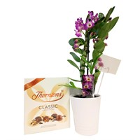 Orchid Pink (Dendrobium) Houseplant & Chocolate Gift Set