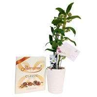 Dendrobium Orchid & Chocolate Gift Set - White