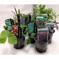 Fantastic Herb Collection of 10 x 9cm Pots - Rosemary/Sage/Chives/Parsley & Many More