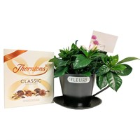 Gardenia In Cup & Chocolate Gift Set - Black
