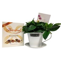 Gardenia In Cup & Chocolate Gift Set - White