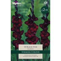 Taylors Bulbs Gladioli Black Star (10 Pack) (TS109)