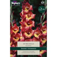 Taylors Bulbs Gladioli Michelle (10 Pack) (TS138)