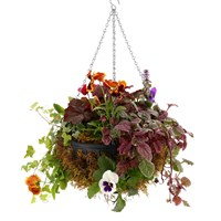 Hanging Basket Seasonal Mossed - 12 inches/30cm Diameter Bedding Container - Autumn