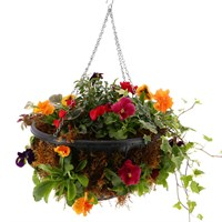 Hanging Basket Seasonal Mossed - 14 inches/35cm Diameter Bedding Container - Autumn