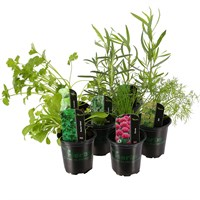 Herb Plant (Collection 2) 9cm Pot - Set of 6