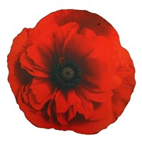 Kent and Stowe Poppy Kneeling Mat (70108035)