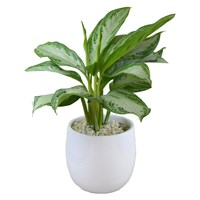 Large Aglaonema In White Ceramic Pot
