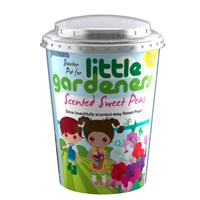 Little Gardeners Scented Sweet Peas Starter Pot (21774)