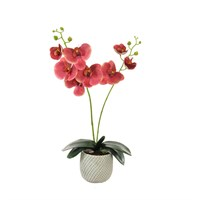 Lotus Artificial Plant - 2 Stem Phalaenopsis Orchid Arrangement - Blush/Berry (594380)