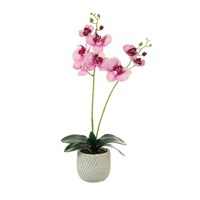 Lotus Artificial Plant - 2 Stem Phalaenopsis Orchid Arrangement - Freckled Pink (531380)