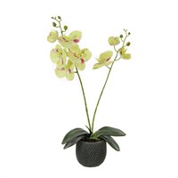 Lotus Artificial Plant - 2 Stem Phalaenopsis Orchid Arrangement - Green/Magenta (542380)