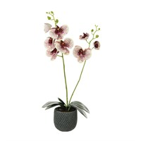 Lotus Artificial Plant - 2 Stem Phalaenopsis Orchid Arrangement - Harlequin (522380)