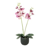 Lotus Artificial Plant - 2 Stem Phalaenopsis Orchid Arrarangement - Light Speckled (526380)