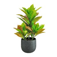 Lotus Artificial Plant - Large Calathea Potted Arrangement (502445)