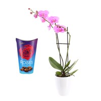 Orchid Light Pink (Phalaenopsis) Orchid Houseplant & Chocolate Gift Set