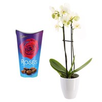 Orchid White (Phalaenopsis) Houseplant & Chocolate Gift Set