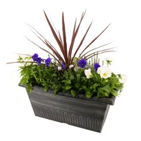 Planted Valencia Seasonal Outdoor Window Box Bedding Container - Autumn