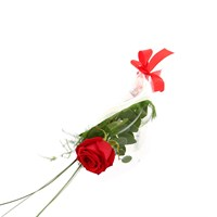 A Single Long Stem Red Rose Valentine's Day