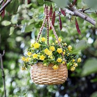 Smart Garden Basket Bouquet - Yellow (5040055)