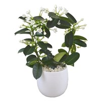 Stephanotis On A Hoop Set Into White Ceramic Pot