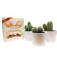 Surprise Mum - Mother's Day Cacti & Chocolates Gift Set - Large