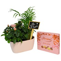 Surprise Mum - Mother's Day Pink Rose & Areca Palm Planted Gift Set