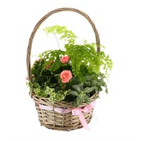 Treat Mum - Mother's Day Planted Houseplant - Design 1