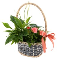 Treat Mum - Mother's Day Planted Houseplant - Design 2
