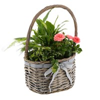 Treat Mum - Mother's Day Planted Houseplant - Design 3