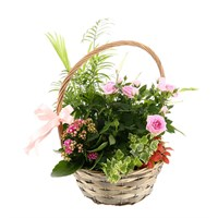 Treat Mum - Mother's Day Planted Houseplant - Design 5